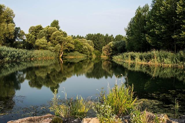 Lužní lesy v české krajině